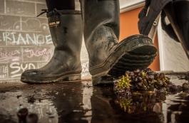 An illustrative photo of the grape crush during harvest 2012 along the Naramata Bench, BC.