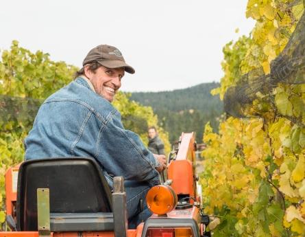 Winemaker Rob Vanwesten picking the Viogner 2014, Naramata Bench