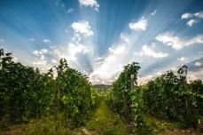 VanWesten_Vineyards-Naramata_Bench_Winery-SouthOkanagan-2